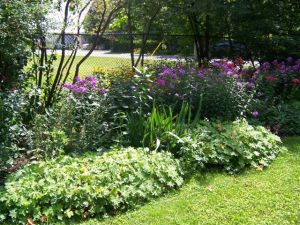 Victoria school garden 2014 026