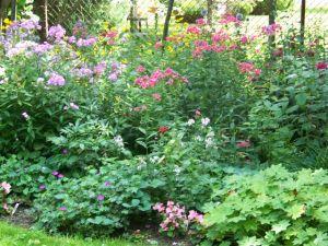 Victoria school garden 2014 027