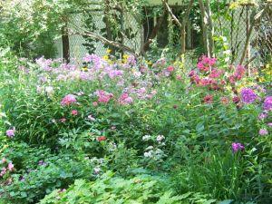 Victoria school garden 2014 028