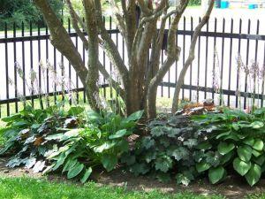 Victoria school garden 2014 031
