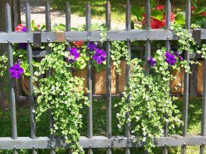 Victoria school garden 2014 033
