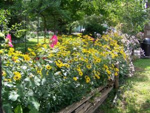 Victoria school garden 2014 038