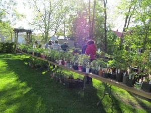 plant_sale_may_2015_photo3