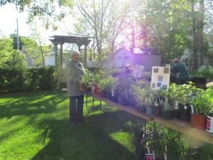 plant_sale_may_2015_photo4