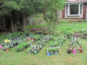 plant_sale_may_2015_photo6