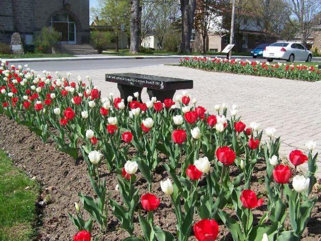 memorial_garden_tulips_2016_2